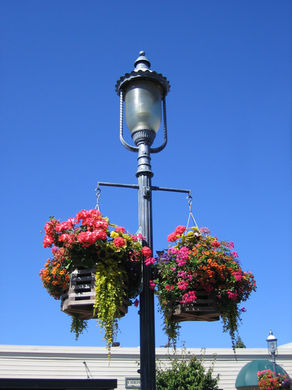 Hanging Flower Baskets in Edmonds, Washington