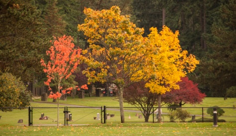 Vibrant Fall Colors in Hickman Park, Edmonds, WA
