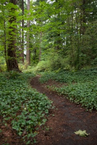Another trail in Hutt Park, Edmonds, WA