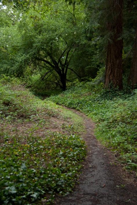 One more trail in Hutt Park, Edmonds, WA