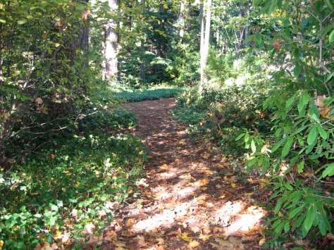 One of the trails in Hutt Park, Edmonds, WA