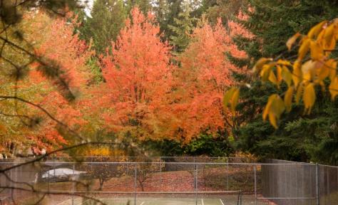 Seaview Park Fall Colors, Edmonds, WA