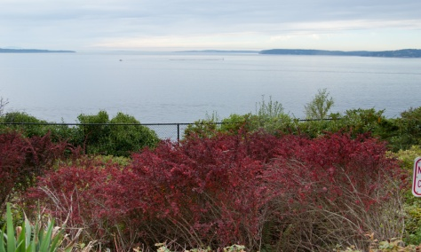 View from Stamm Overlook Park, Edmonds, WA - Whidbey Island on the right